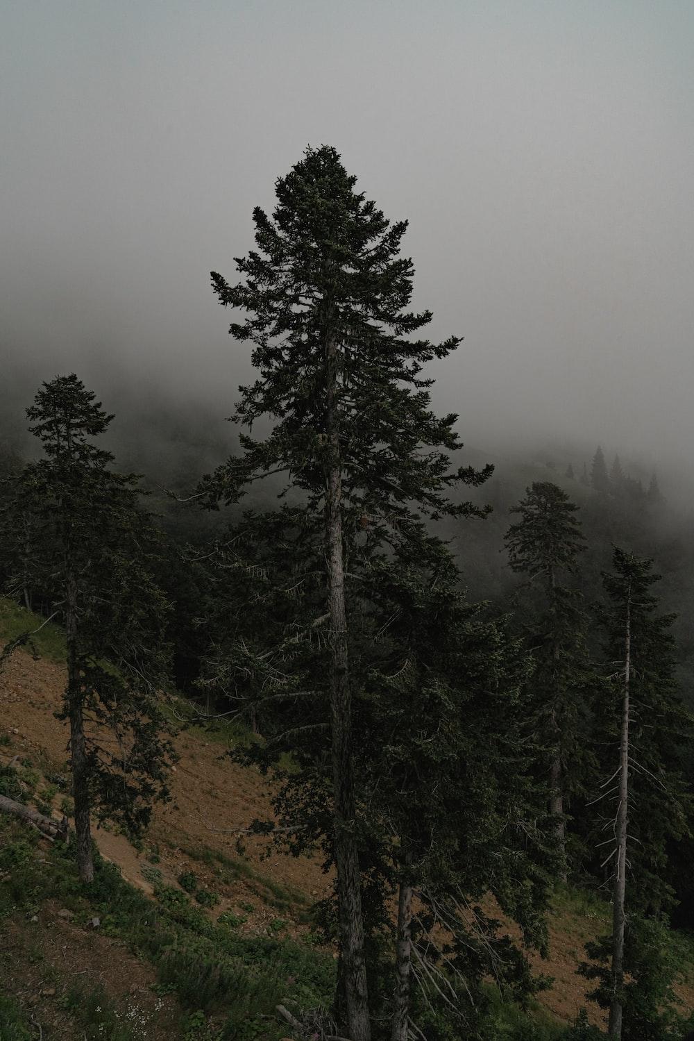 green pine tree on brown field