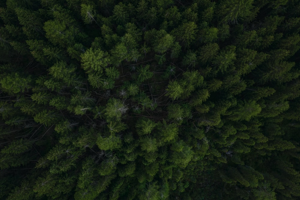 green trees on forest during daytime