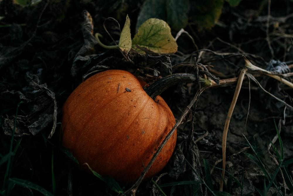 orange pumpkin on green grass