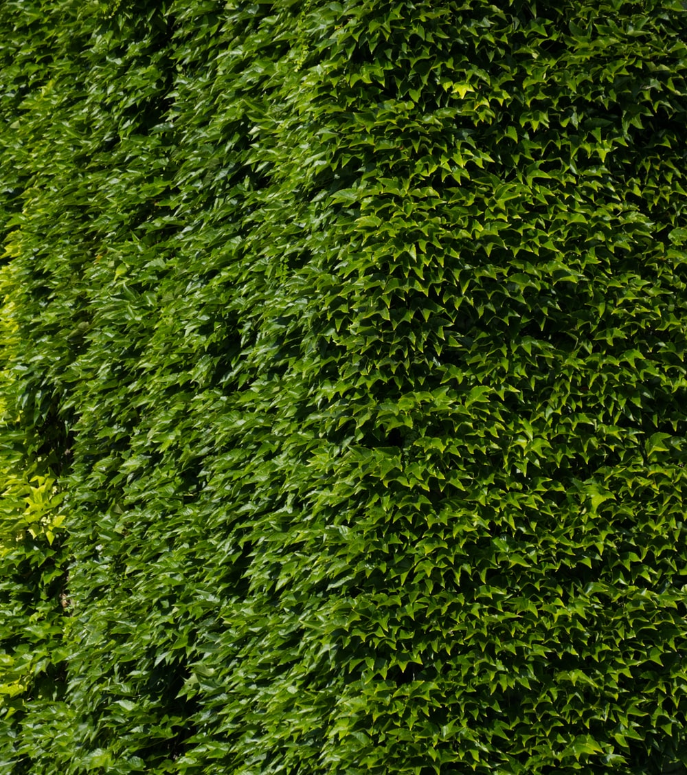 green leaves on green grass field