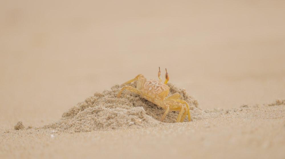 yellow crab on white sand during daytime