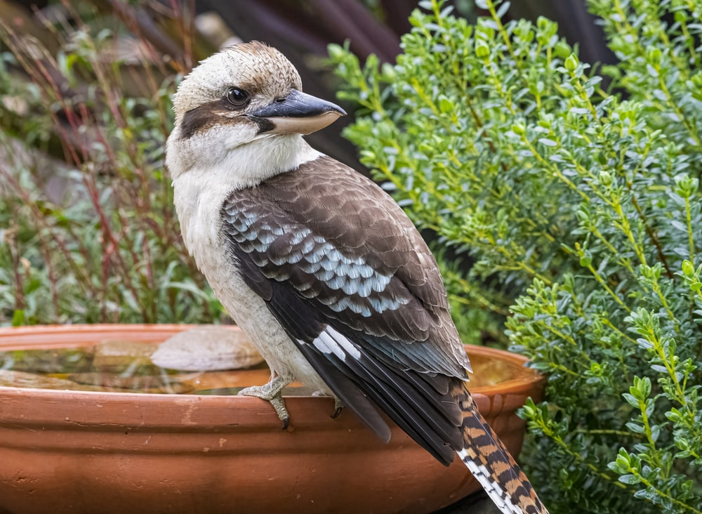 brown and white bird on brown pot