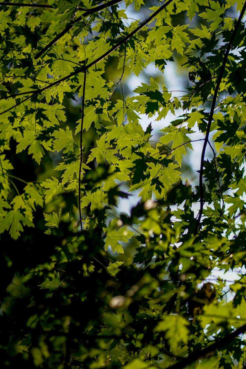 green leaves tree during daytime