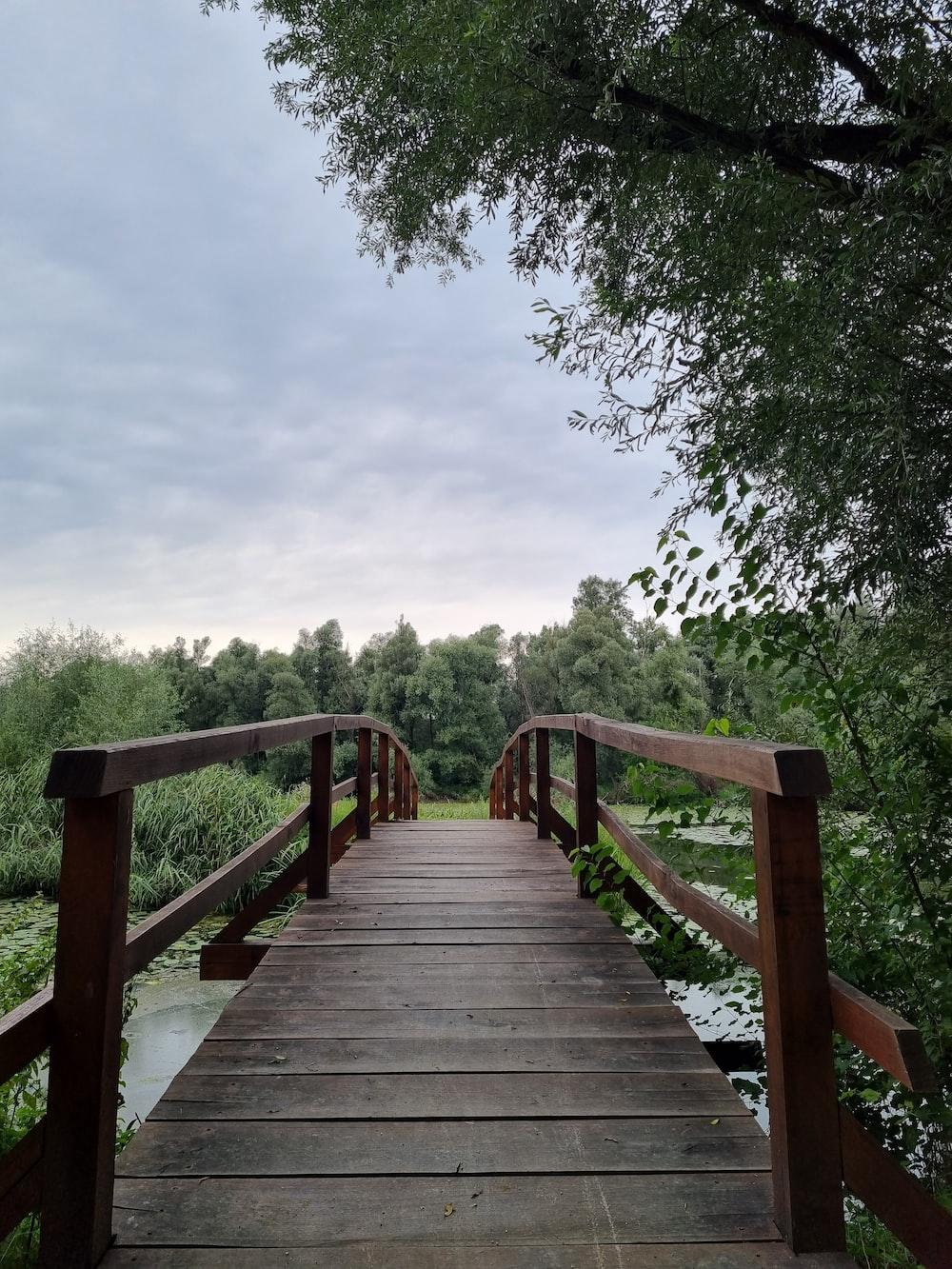 brown wooden bridge near green trees during daytime