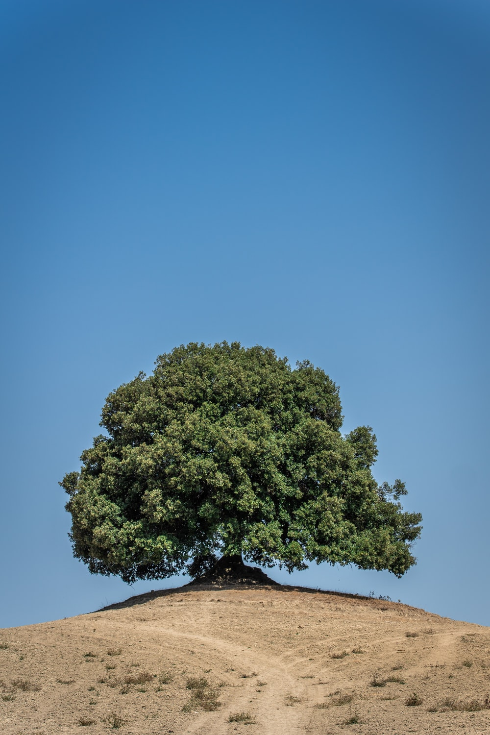 green tree on brown sand during daytime