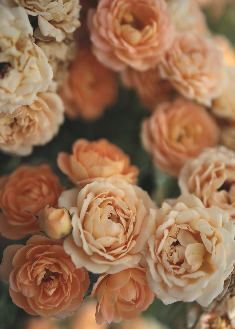 orange and white flower petals