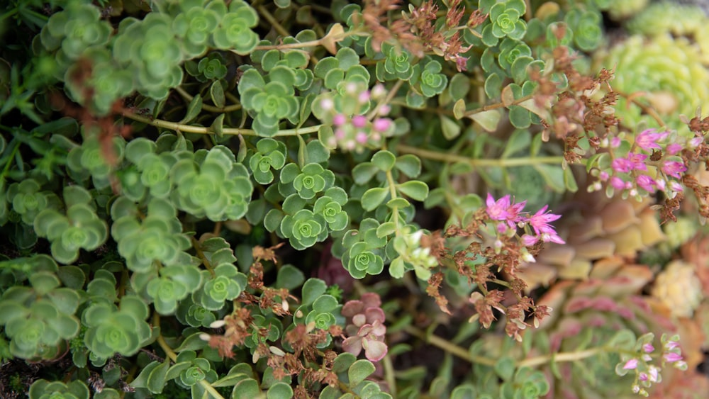 green and pink flower plant