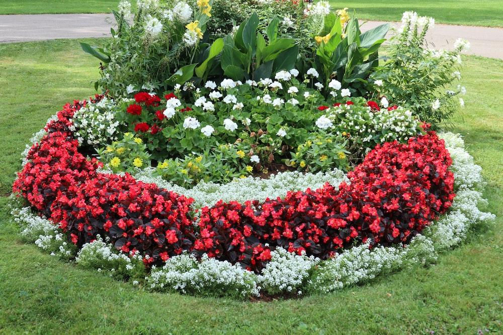 red and white flower garden