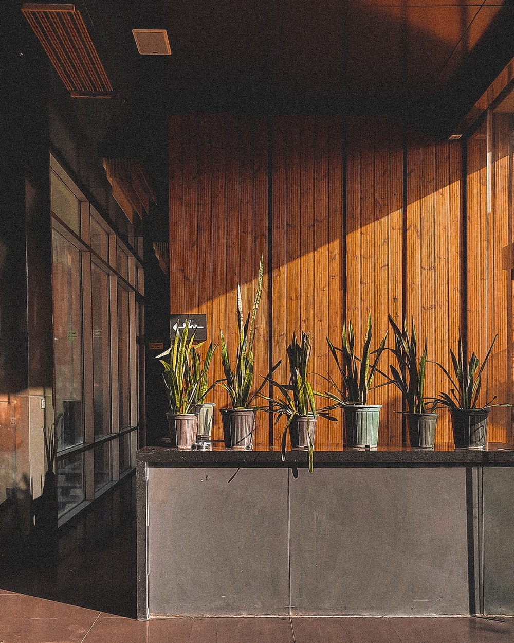 green potted plants on gray concrete table
