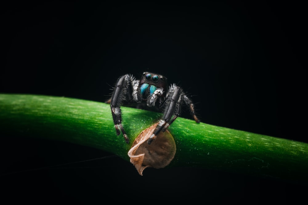 black and red spider on green leaf
