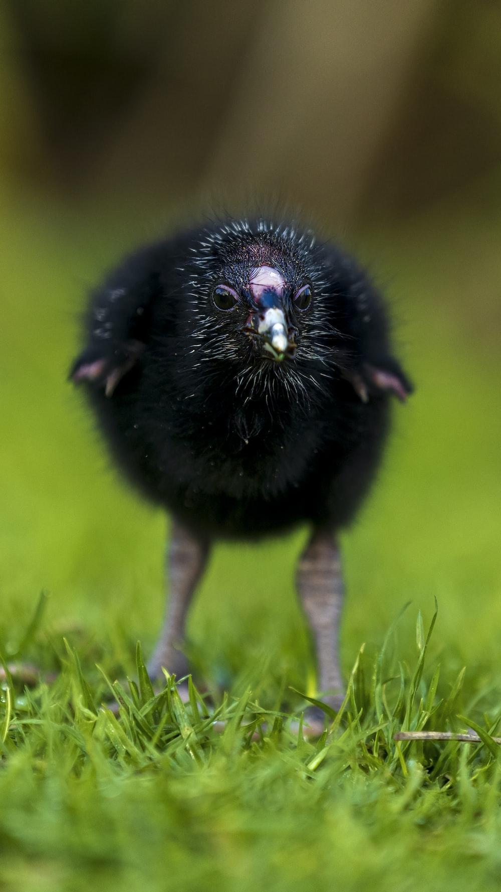 black bird on green grass during daytime