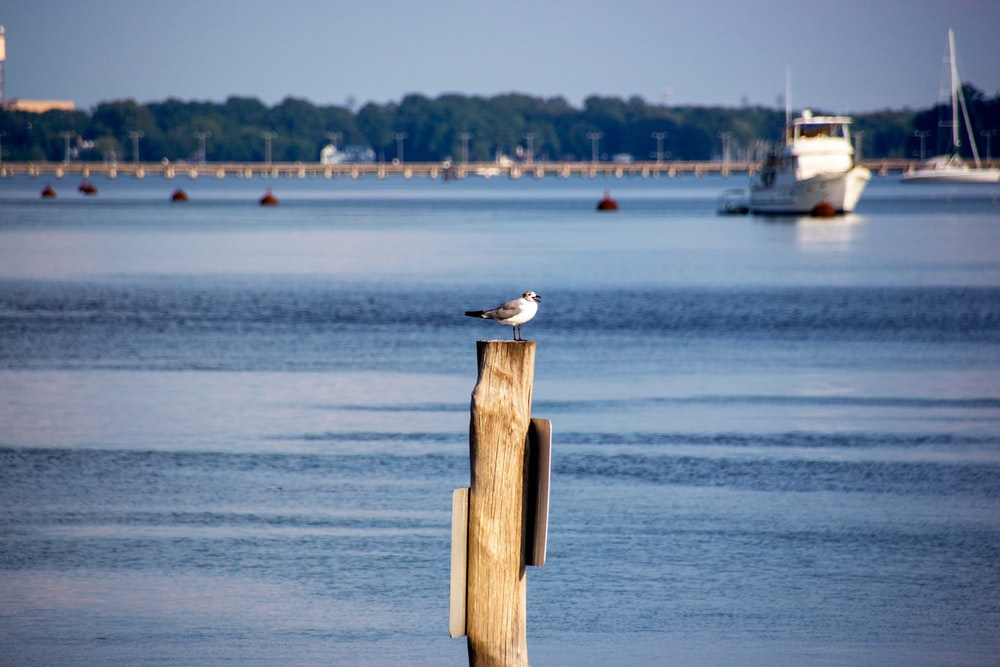 white and gray bird on brown wooden post near body of water during daytime
