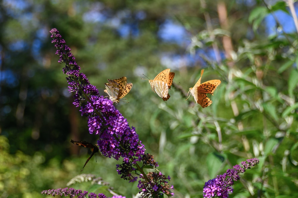 brown butterfly perched on purple flower during daytime