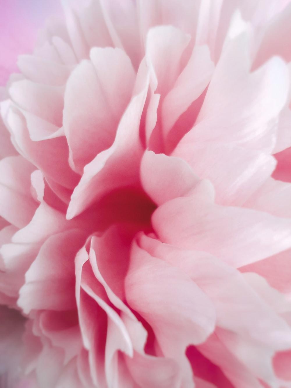 pink flower in macro shot