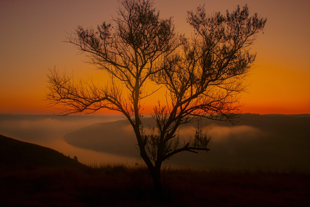 bare tree on green grass field during sunset