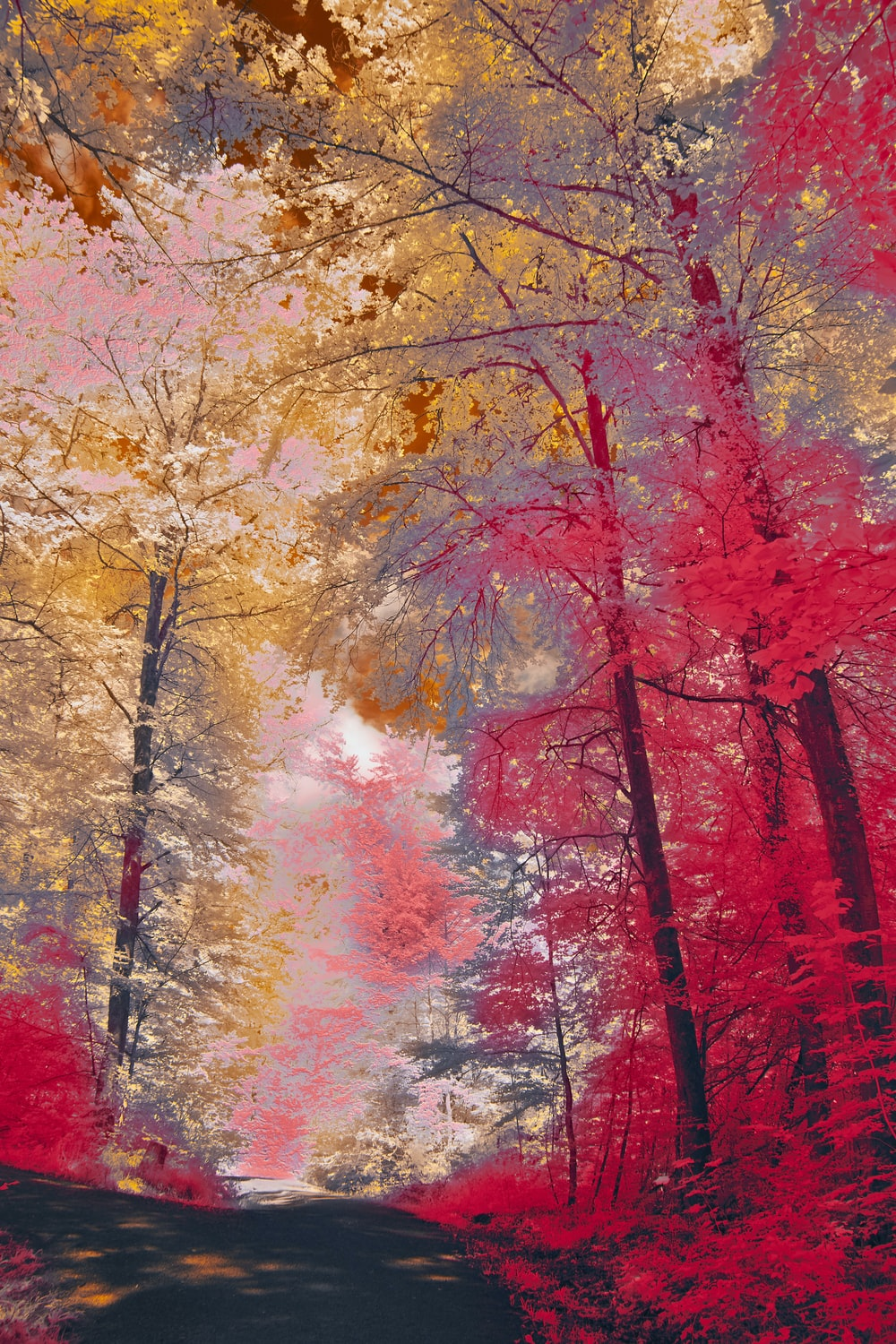 brown trees with red leaves