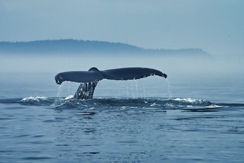 whale in the middle of ocean during daytime