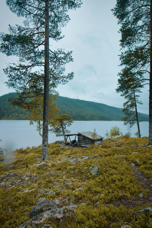 green tree beside lake during daytime