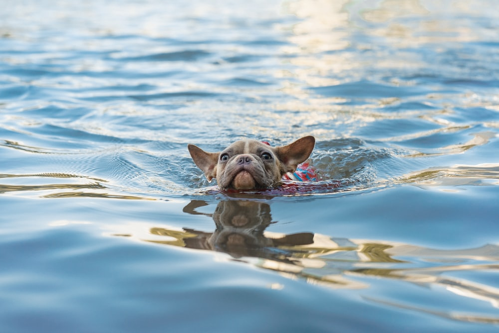 brown short coated dog swimming on water during daytime