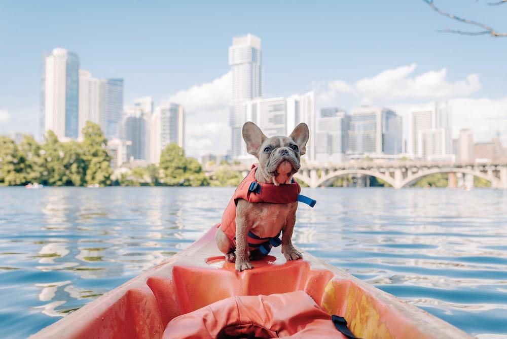 brown short coated dog on orange kayak
