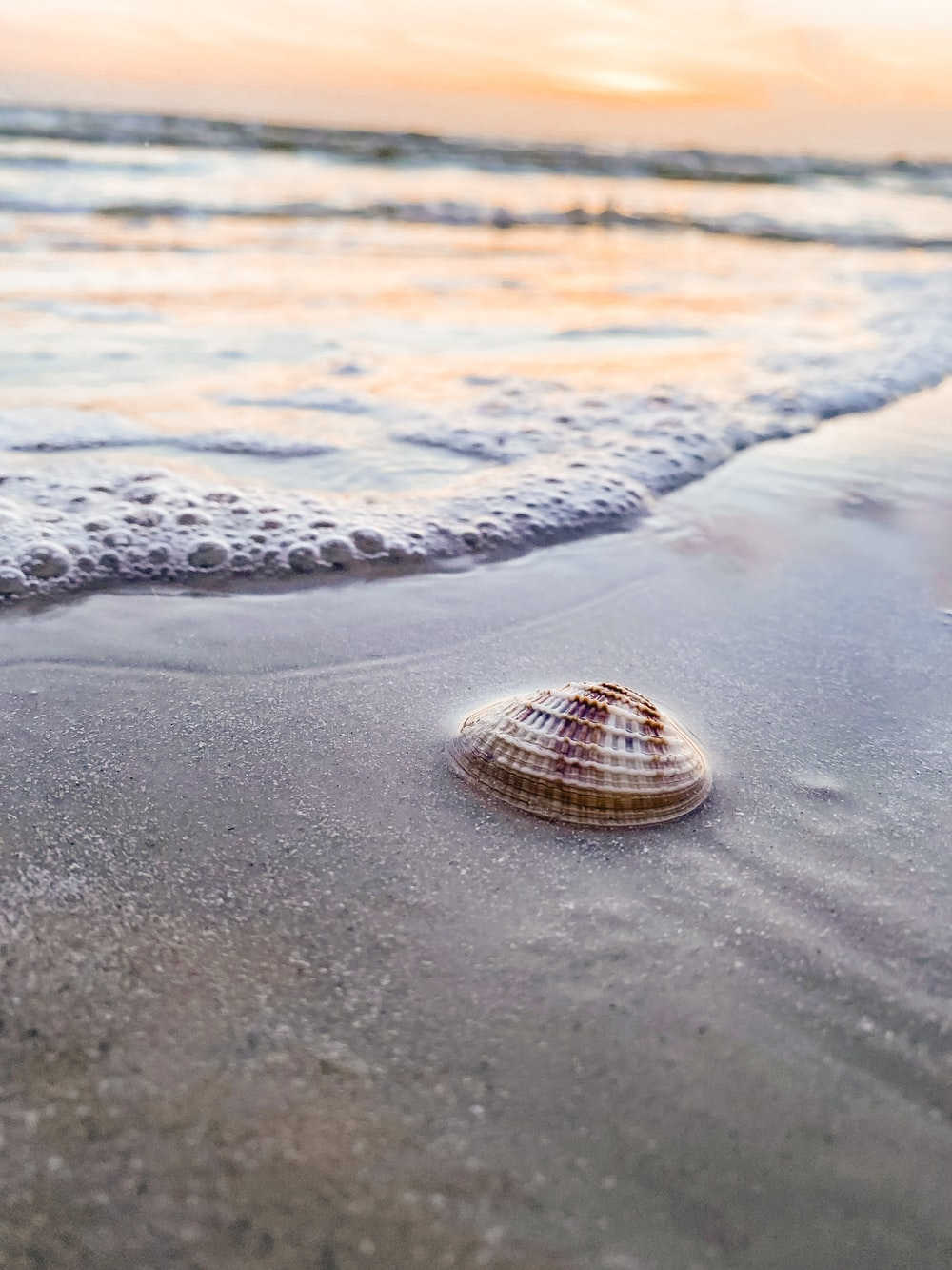 brown and white seashell on beach during daytime