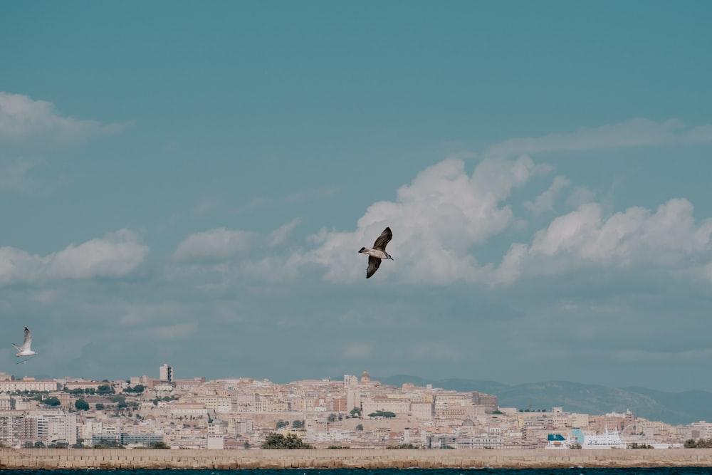 black bird flying over the city during daytime