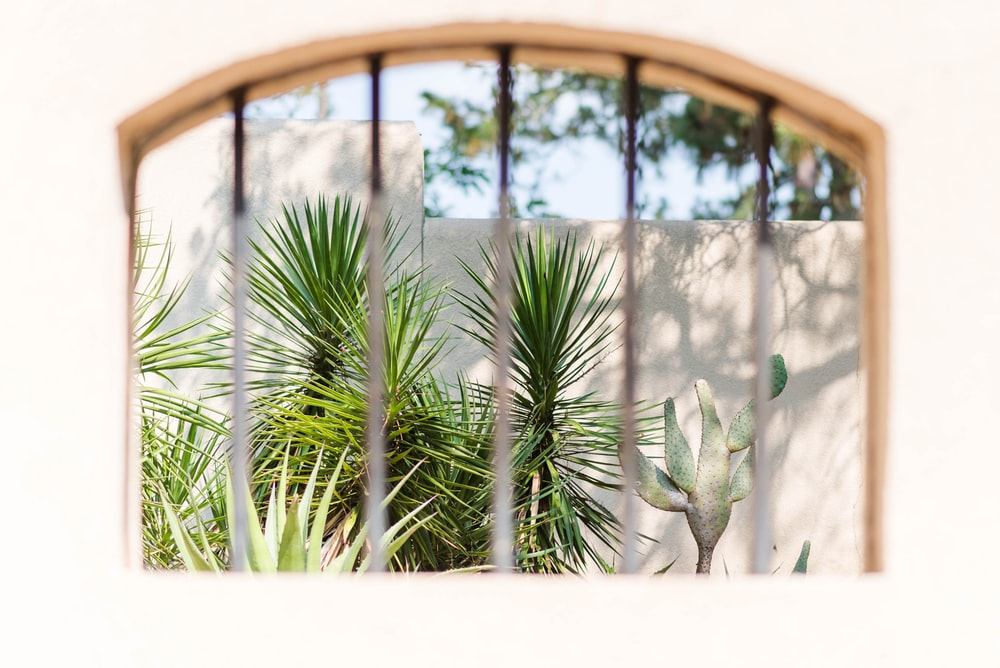 green palm tree near brown wooden frame