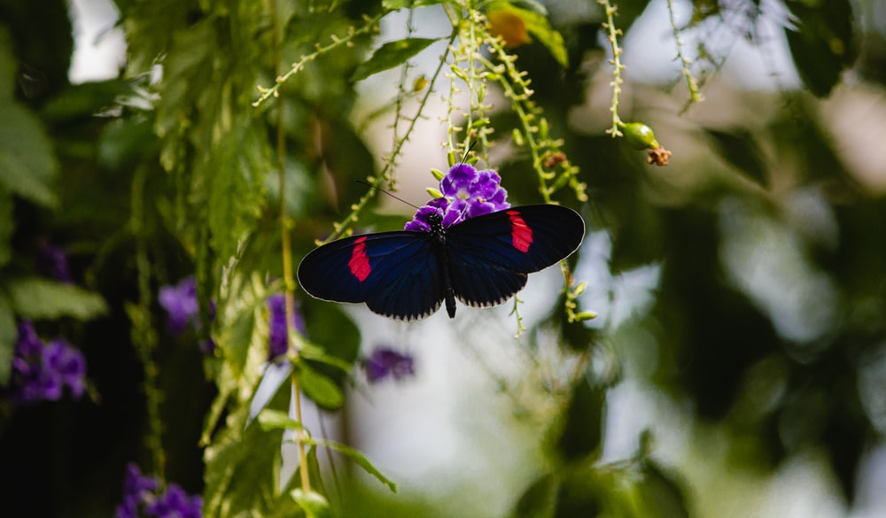red and black butterfly perched on purple flower in close up photography during daytime