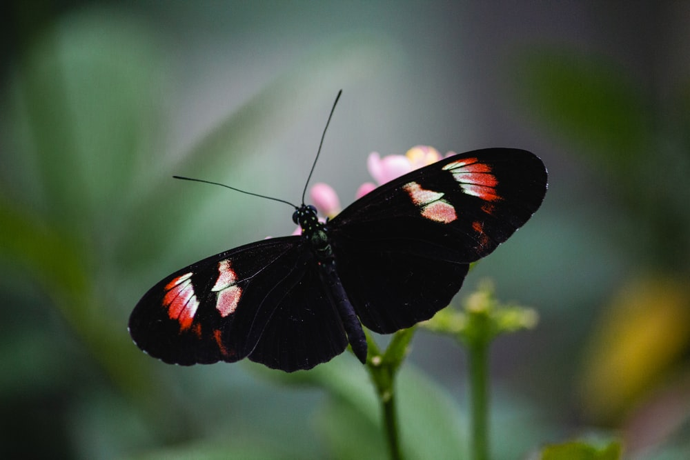 black white and red butterfly perched on green plant