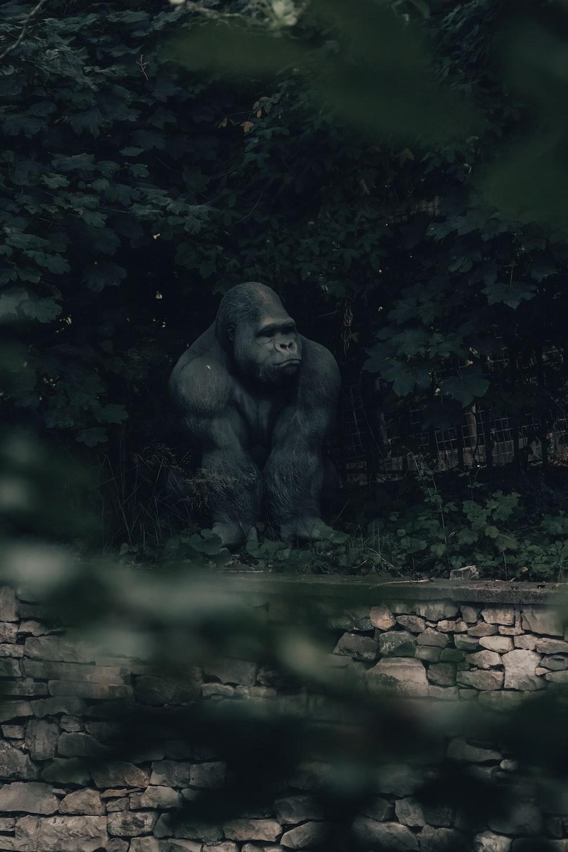 gorilla on green grass field