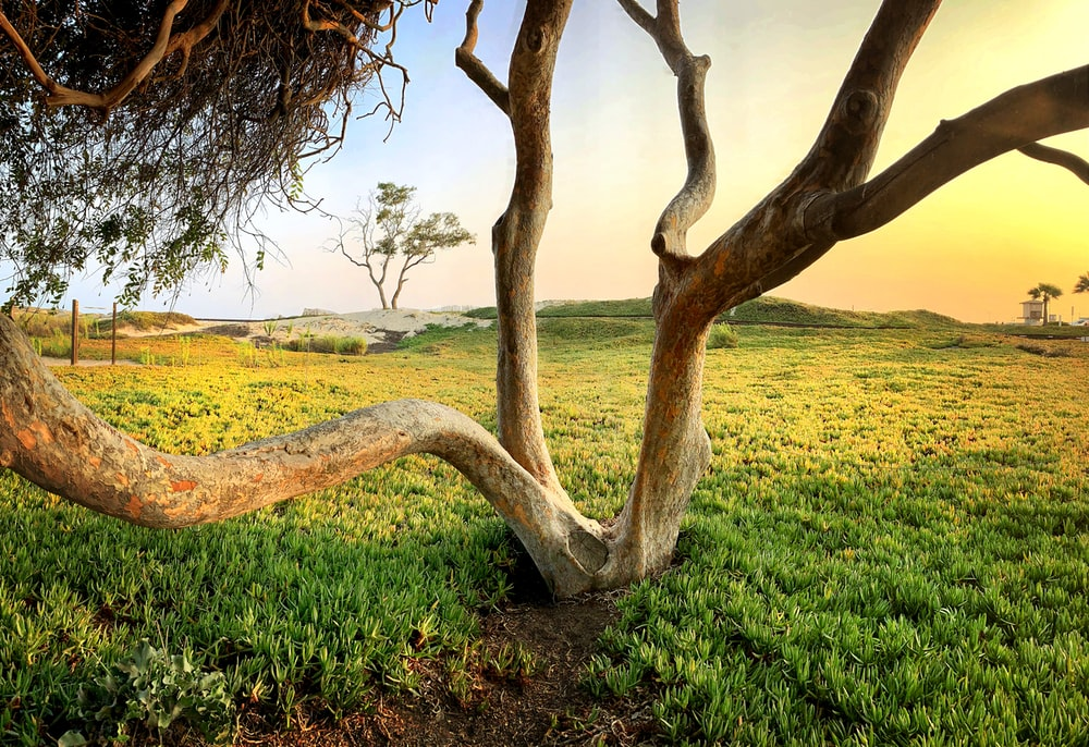 brown tree on green grass field during daytime