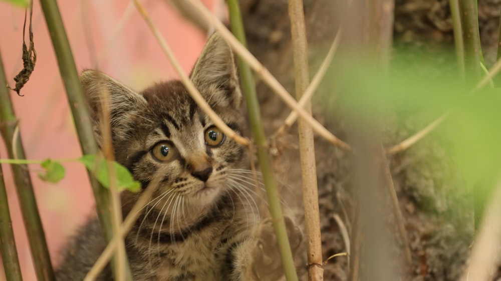 brown tabby cat on brown grass