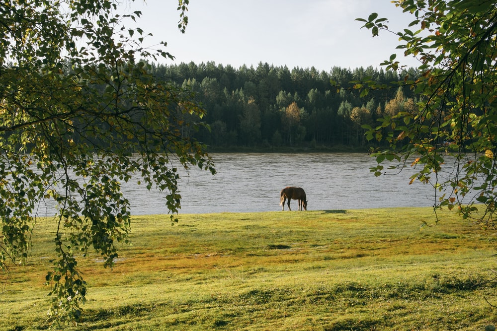 brown horse on green grass field near lake during daytime