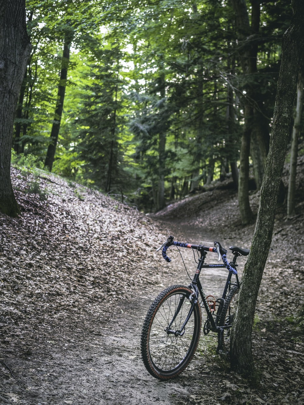 blue and black mountain bike on forest during daytime