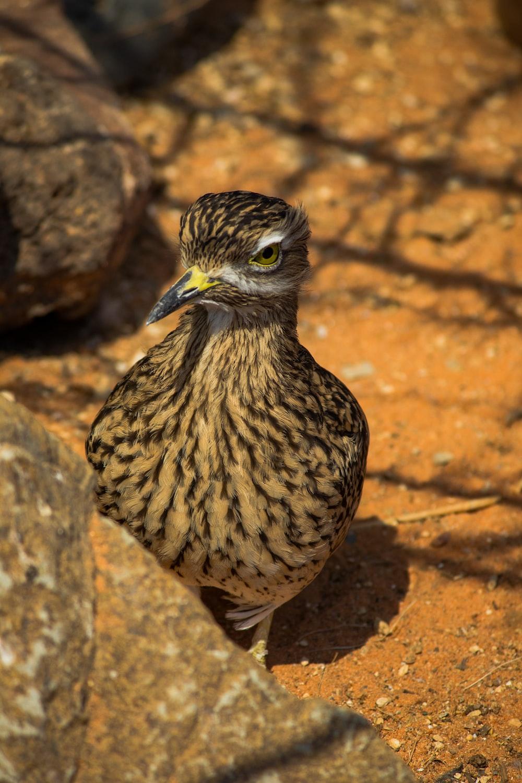 brown owl on brown rock during daytime
