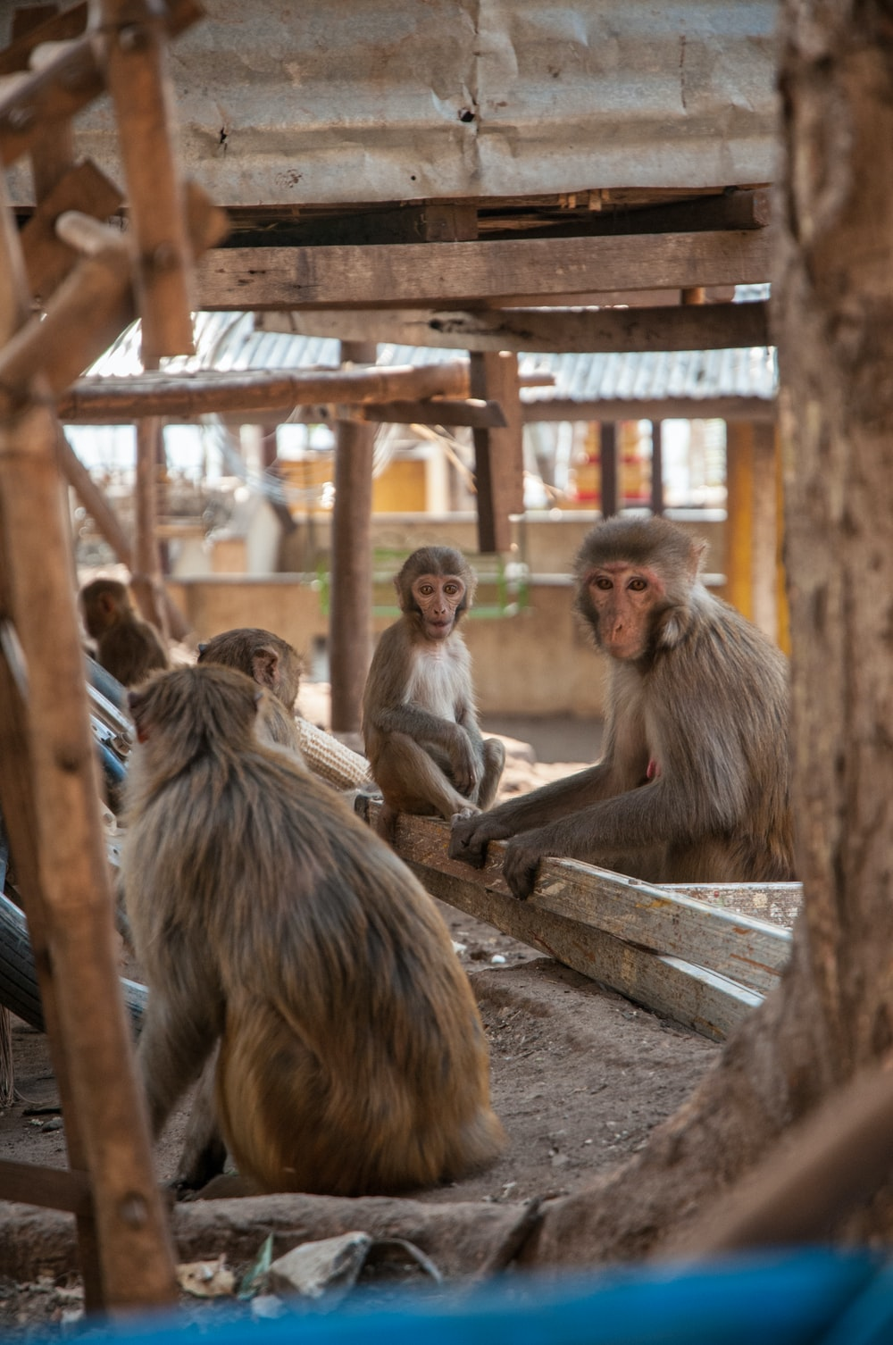 monkey sitting on brown wooden bench during daytime
