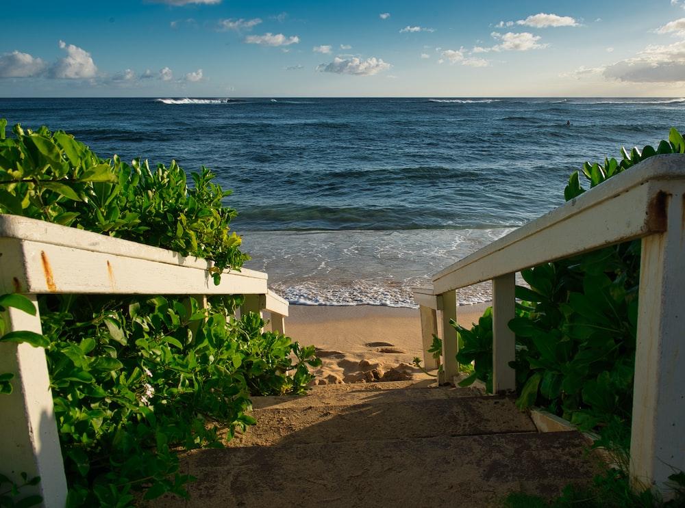 green plants on seashore during daytime