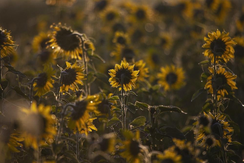 yellow and black flowers in tilt shift lens