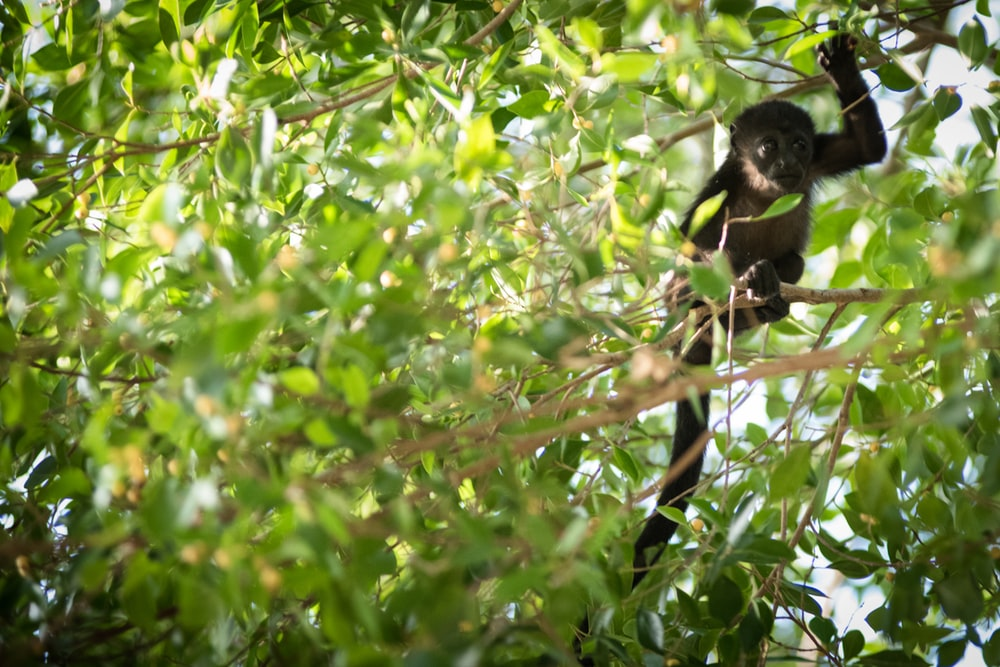 black monkey on tree branch during daytime