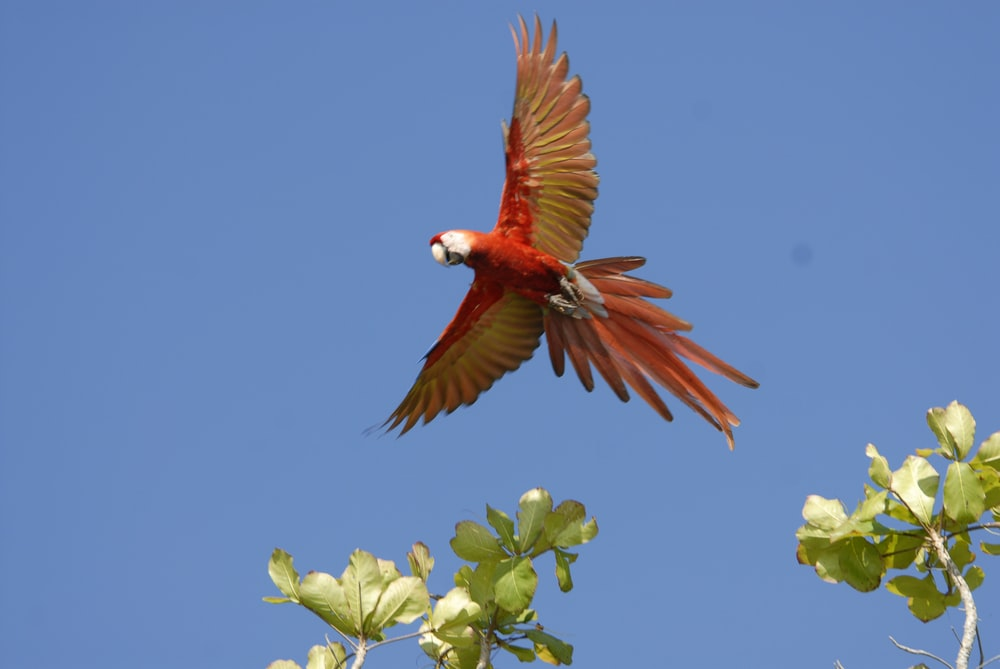 red and white bird on green tree branch