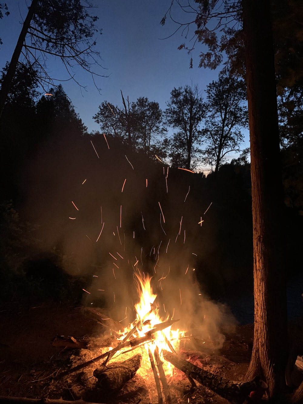 fire on forest during night time