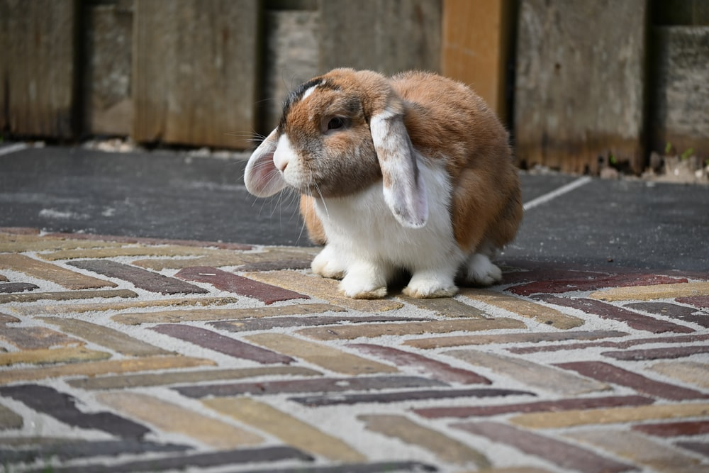 brown and white rabbit on brown and white floor