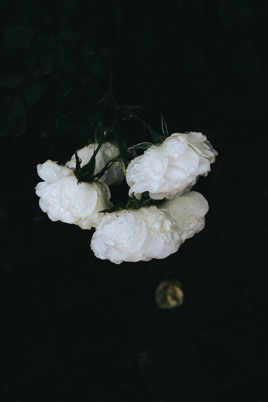 white roses on black textile