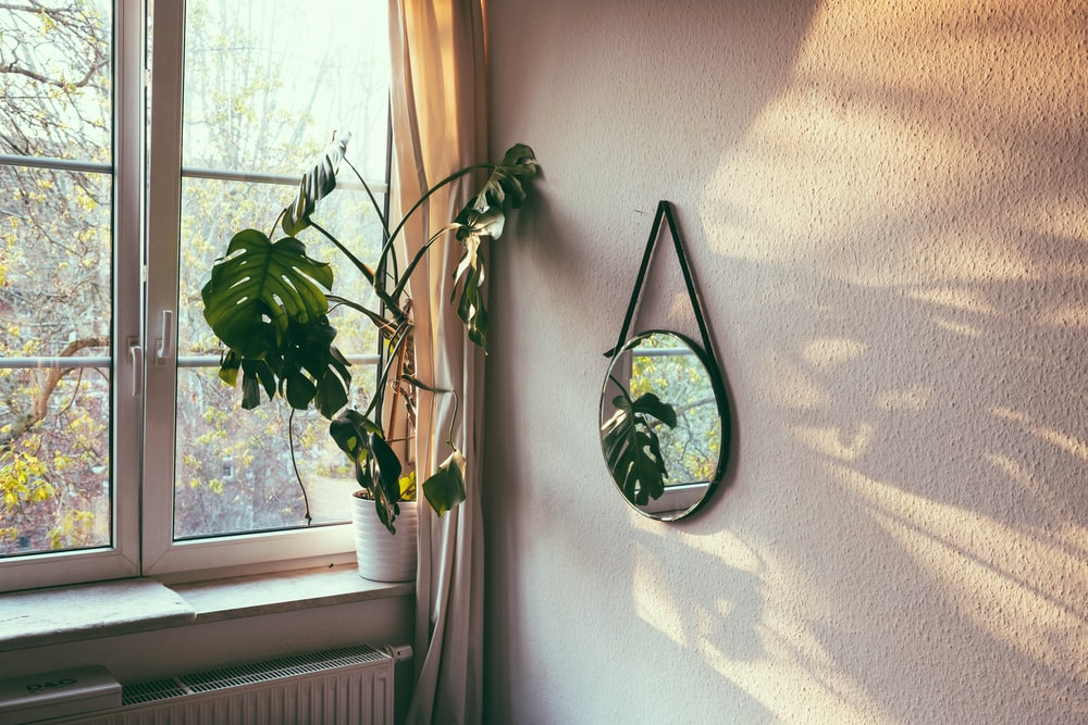 green plant beside window during daytime