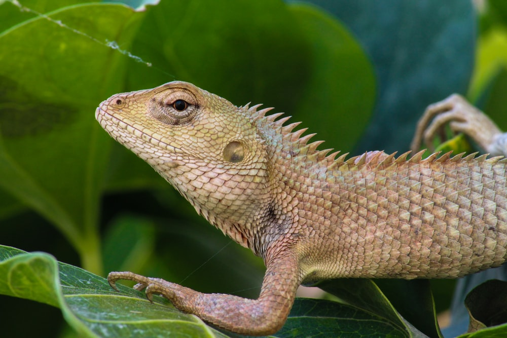 brown and white lizard on green leaf