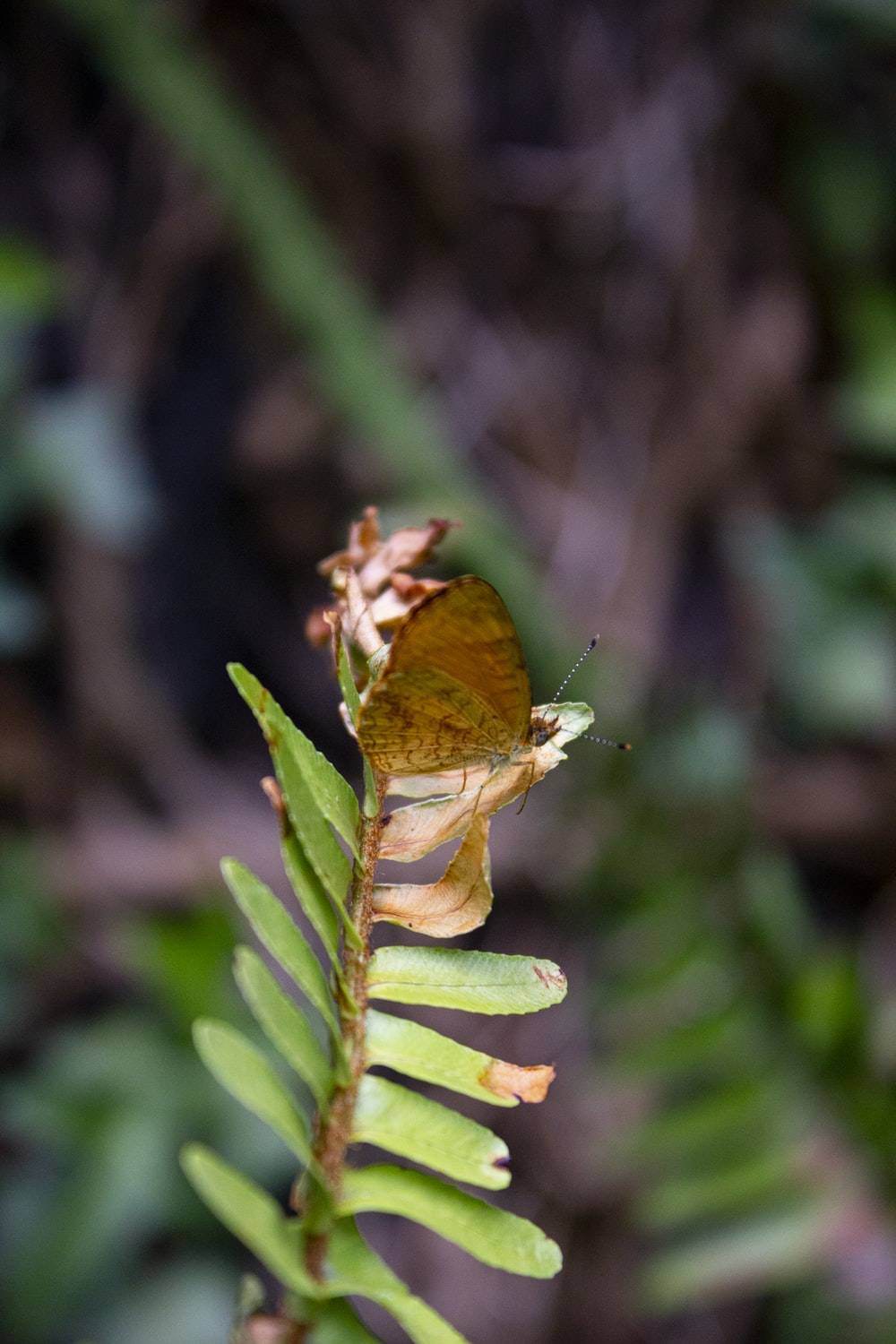 brown butterfly perched on green plant