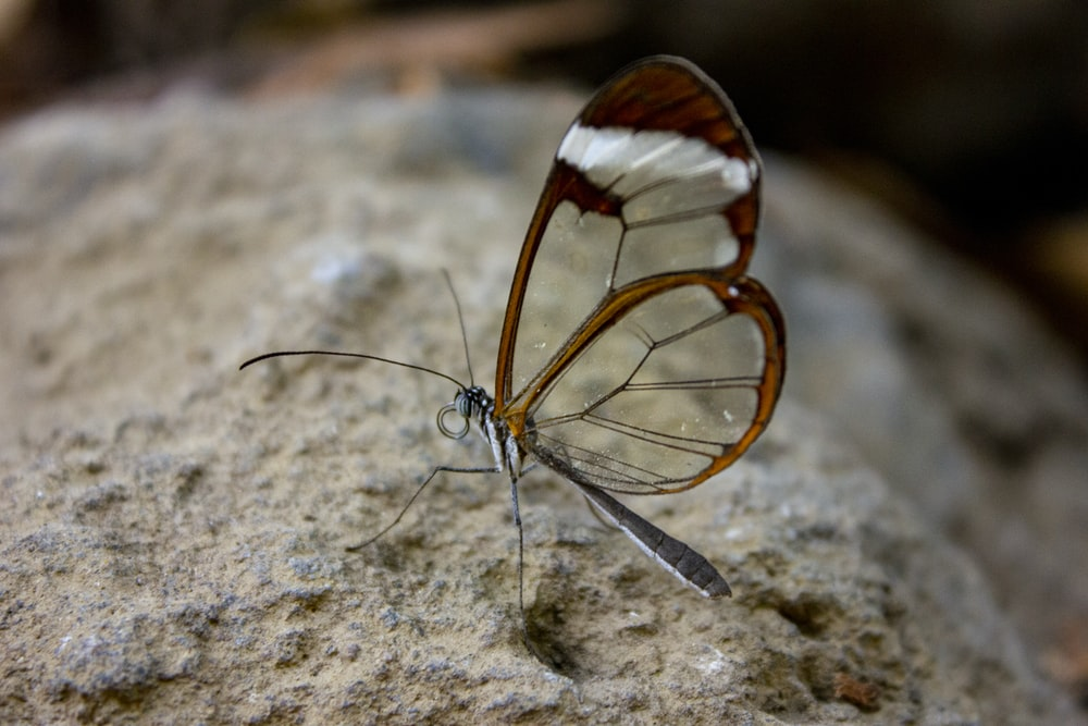 brown and white butterfly on brown soil in close up photography during daytime