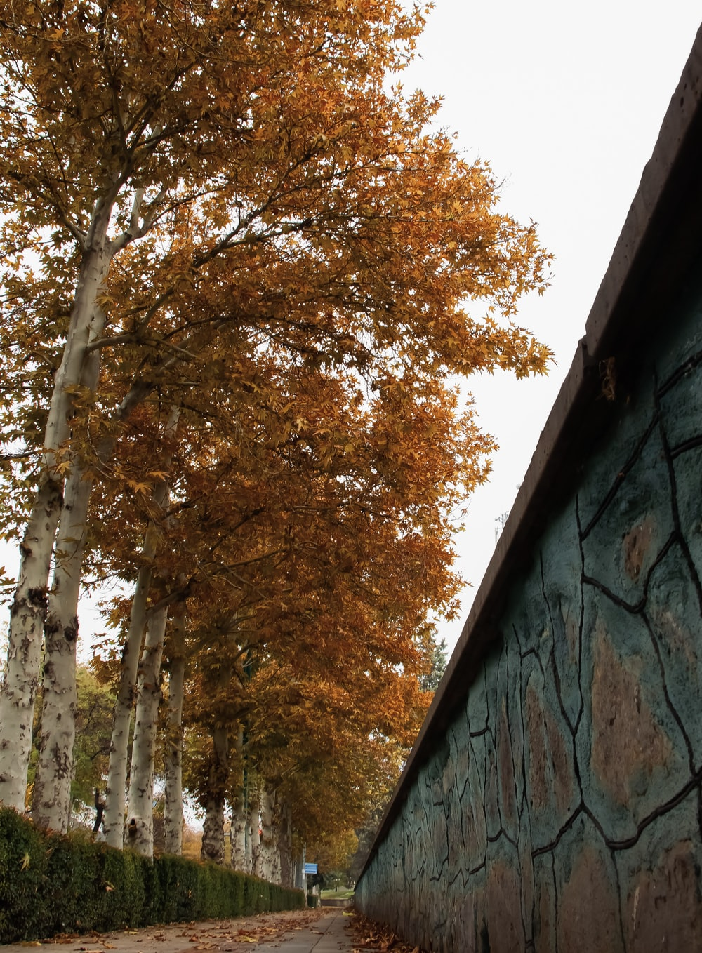 brown and green trees beside gray concrete wall