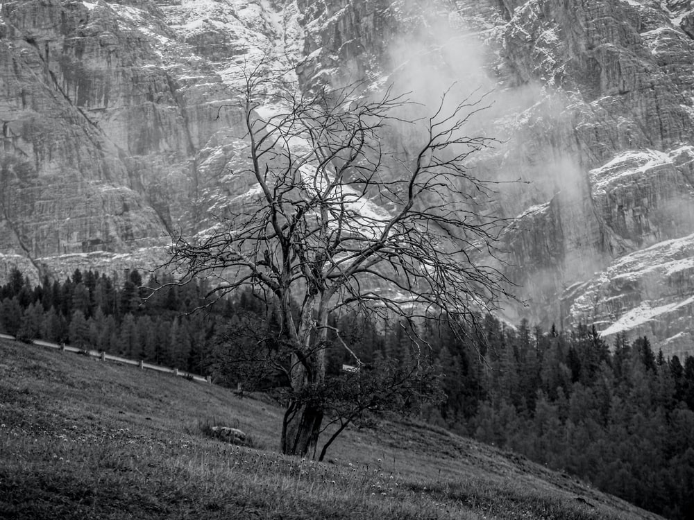 grayscale photo of trees on hill