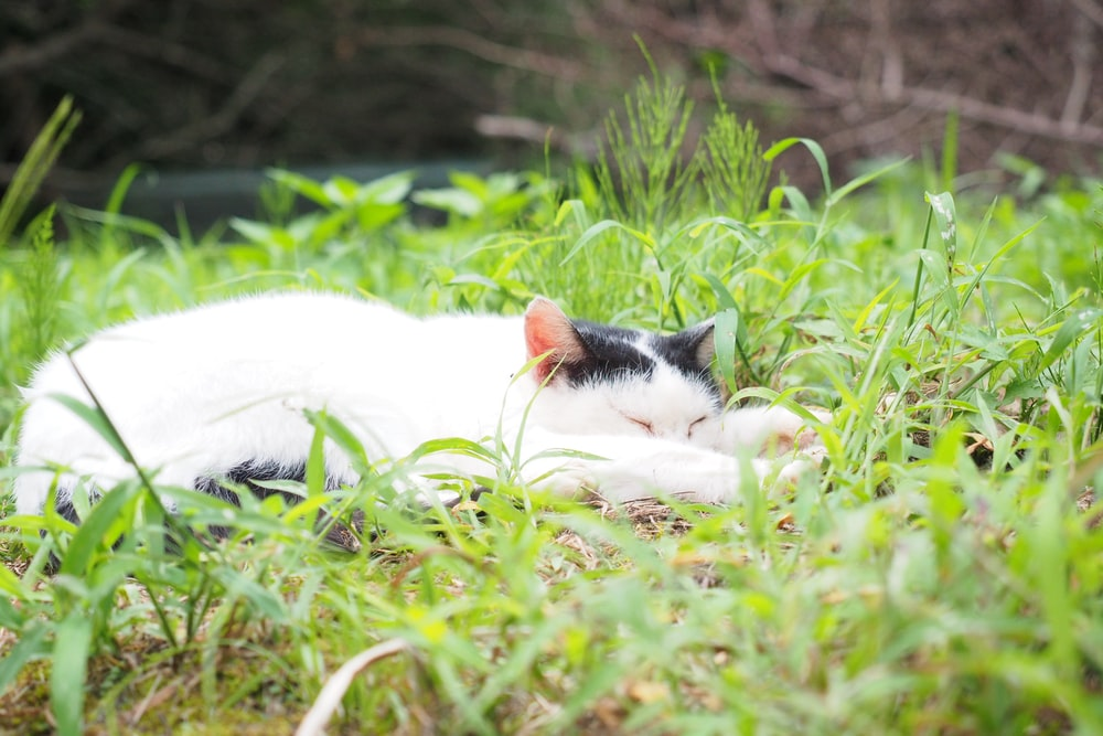 white and black cat lying on green grass during daytime